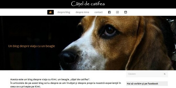 catel-catifea